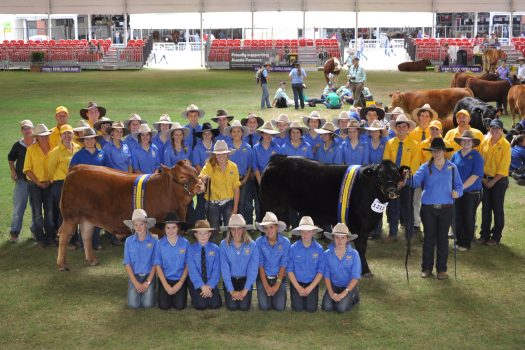 the-2016-cattle-team-copy